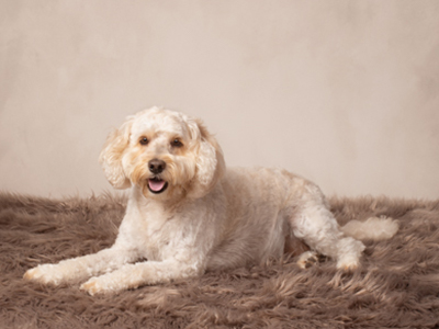 Bronze package option for cute dog photoshoot by Tracy Main