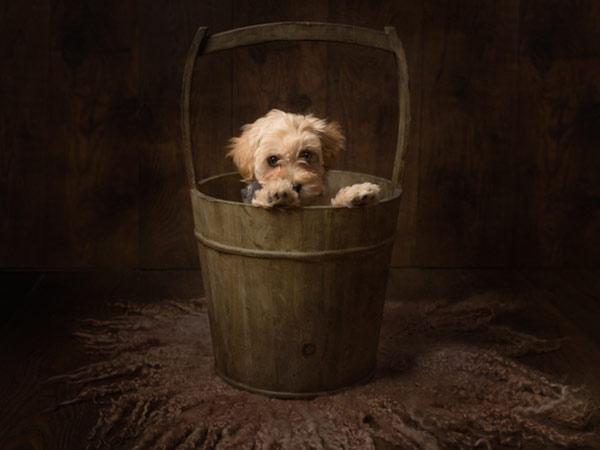 Cute dog photoshoot in bucket