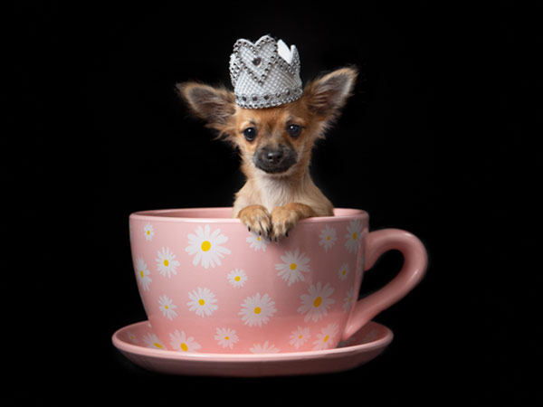 Cute dog photoshoot in teacup