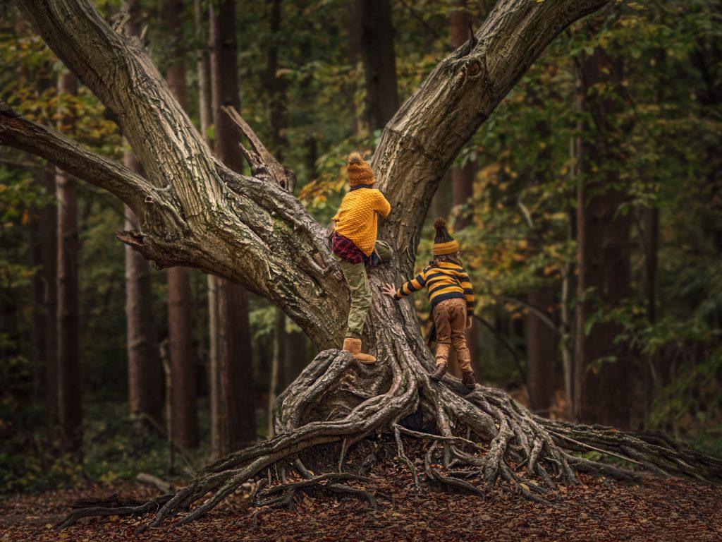 children exploring nature climbing an old tree