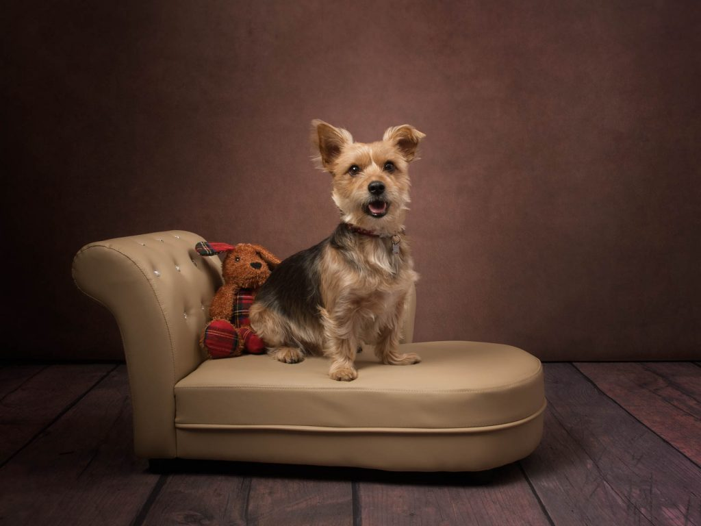 small sofa for a small dog photoshoot