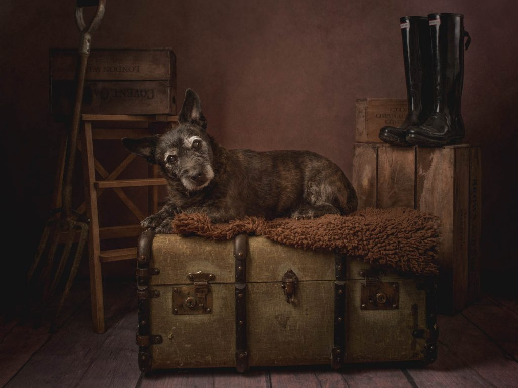 dog sat on a trunk in a fine art style photoshoot