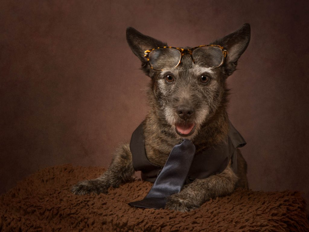 dog wearing glasses and tie