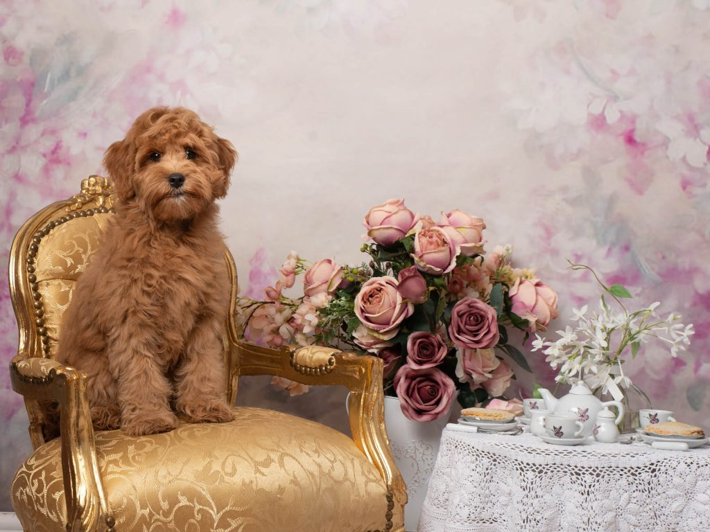 dog having tea dog photoshoot