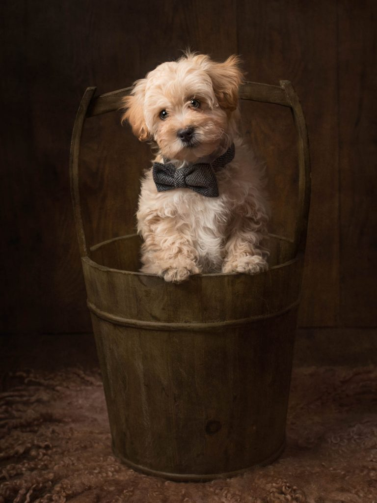 gorgeous dog in an old bucket photoshoot