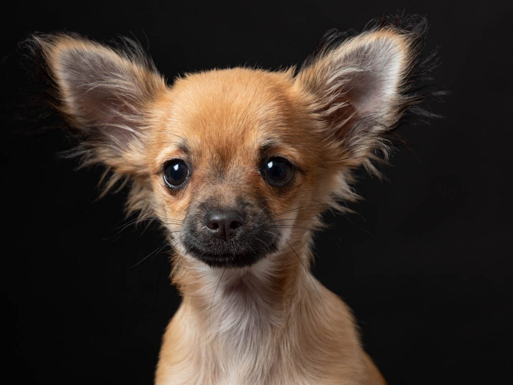 close up of cute dog photography session