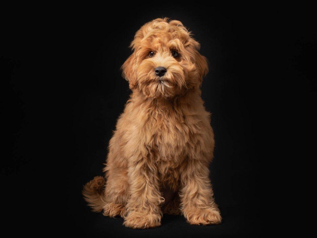 cute dog photoshoot