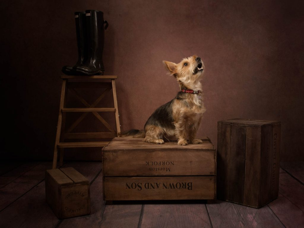 small yorkshire terrier sat on a crate