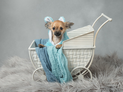 Silver package option for cute dog photoshoot by Tracy Main