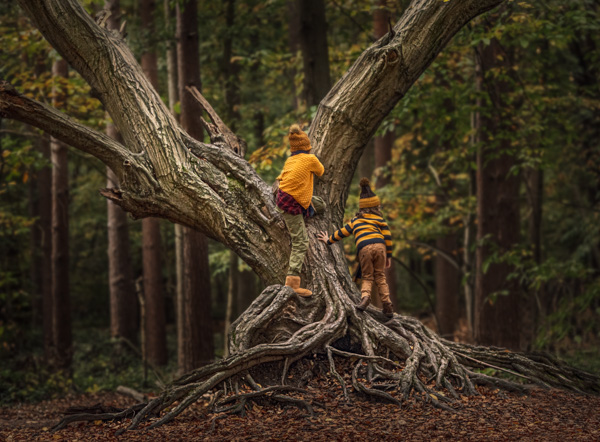children climbing a tree outdoor photo session