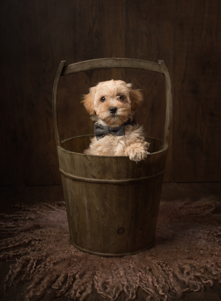 cute dog with bow tie in a bucket