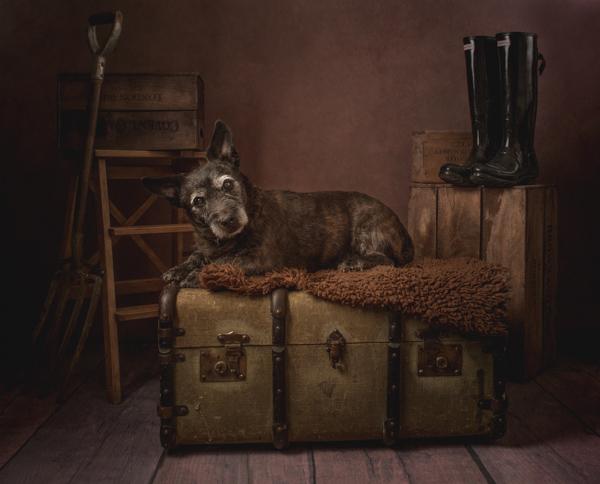 cute old dog fine art portrait