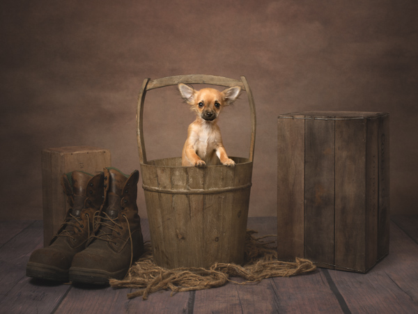 dog in a pale bucket