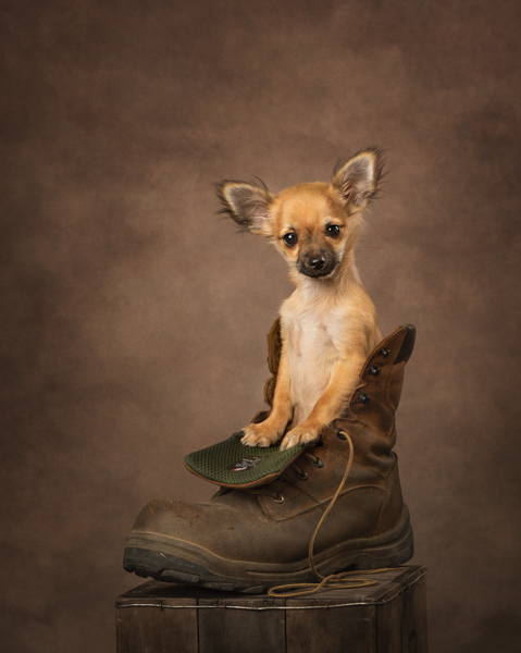 dog in a boot