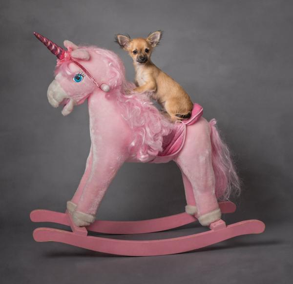 dog sat on a unicorn