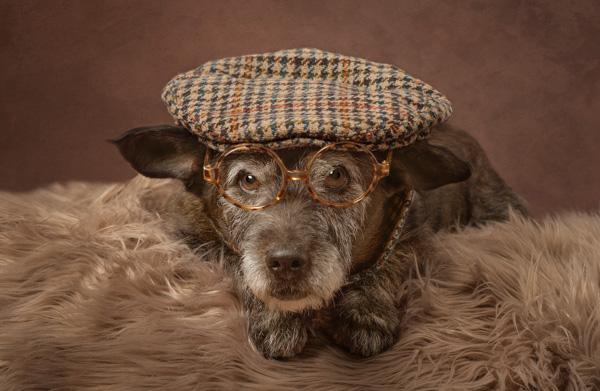 flat cap on a dog wearing glasses