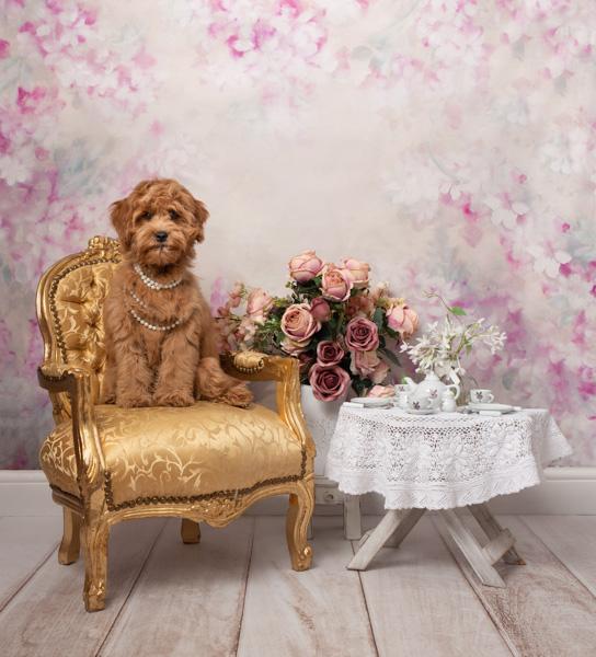 shaggy dog themed portrait photo