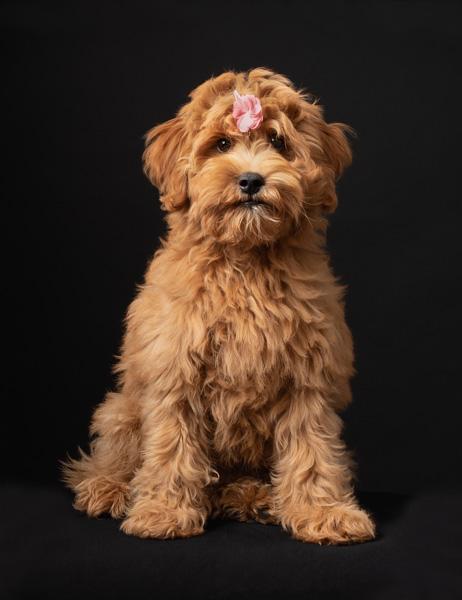 flower on a shaggy dog